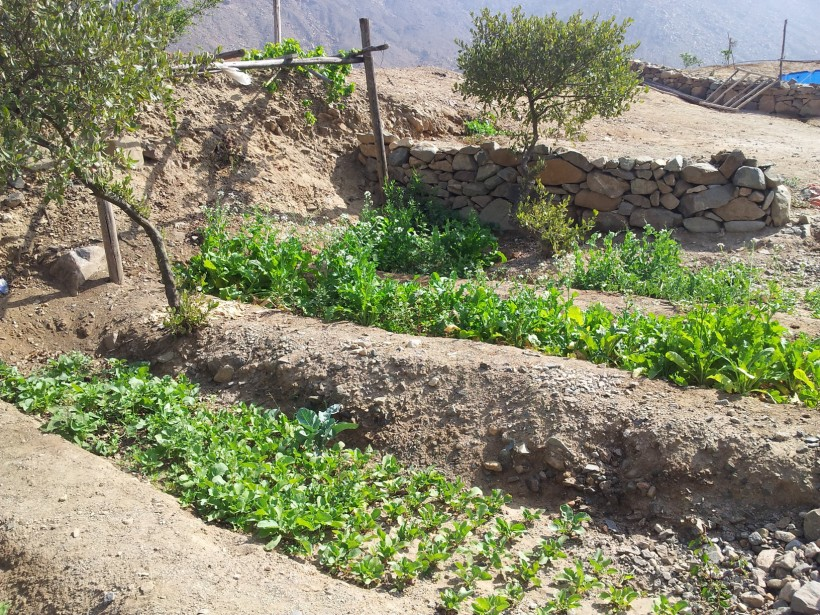 Ecological studies & green mining